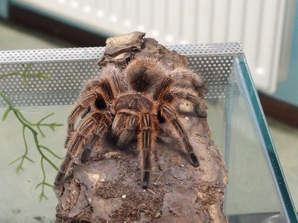Kleurplaten Vogelspinnen.Natuurcentrum De Boshoek Terugblik Op Activiteit